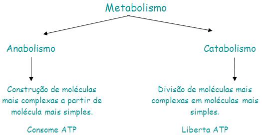 O Que é Anabolismo e Catabolismo?
