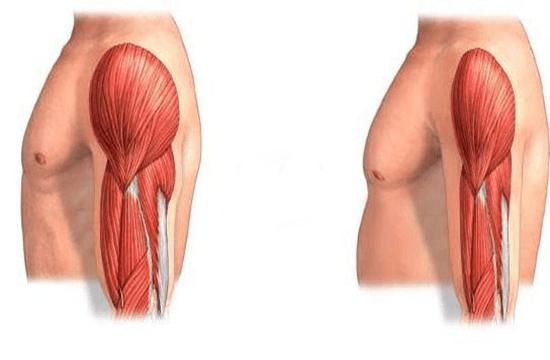 Catabolismo Muscular - Saiba Como Evitar!
